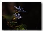 이지포토 님의 화야산의 꽃들3